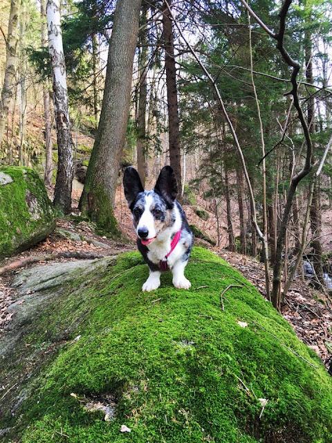 podróże z psem, w góry z psem, karkonosze z psem, cicha dolina