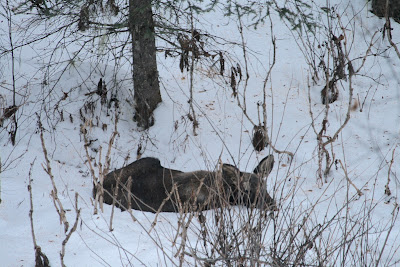 On being a good moose neighbor