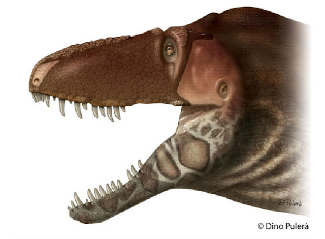 New dinosaur species sheds light on evolution, provides facial makeover for tyrannosaurs