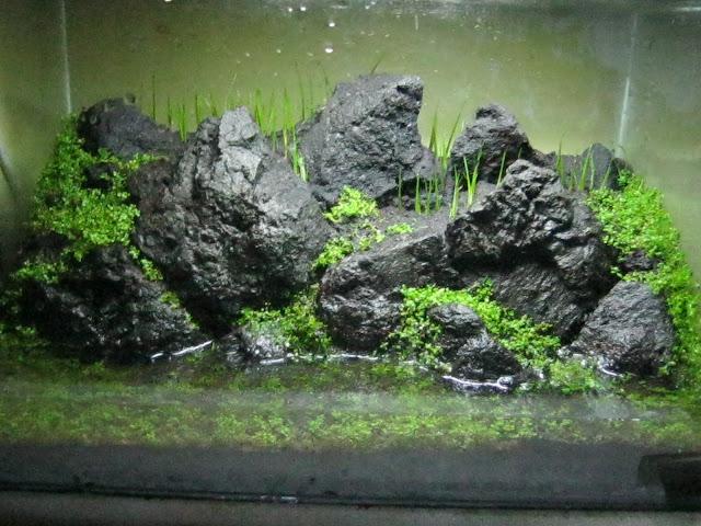 Gambar desain aquascape blog images - Gambar aquascape ...