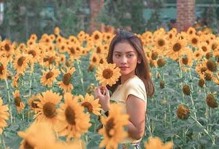 Sarah Tuffahati di Kebun Bunga Matahari