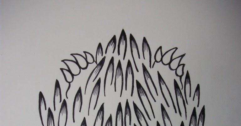 merlins echidna