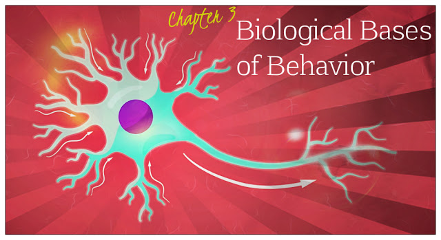 the biological and psychological basis of learning Learning objectives for each chapter that reinforce the most important material  professor of human biological psychology, stockholm university  eating and emotions, with further chapters on the biological basis of psychological disorders and the effects of drug-taking uniquely, the authors emphasise the importance of learning and memory.