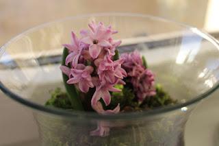 hiacynty, kwiaty w domu, poczuć wiosnę