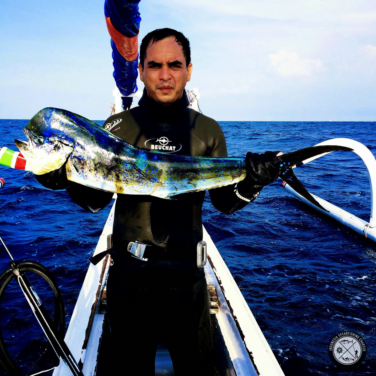 Mahi Mahi, dorado, dolphinfish, tumpek, lemadang caught in North Bali season start October until January