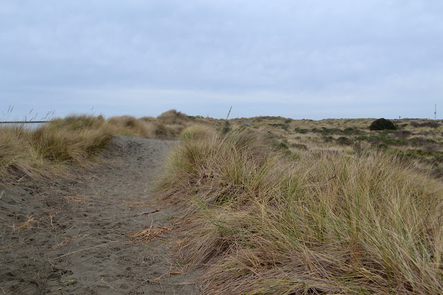 trail through the dunes