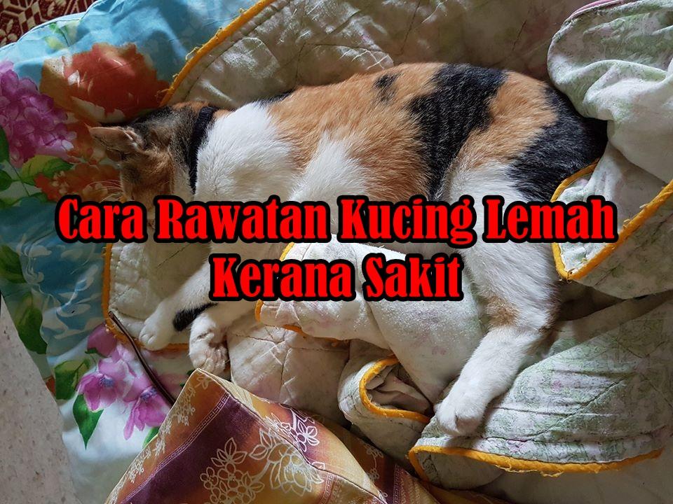 Cara Merawat Kucing Lemah Nurfuzie Com