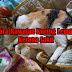 Cara Merawat Kucing Lemah