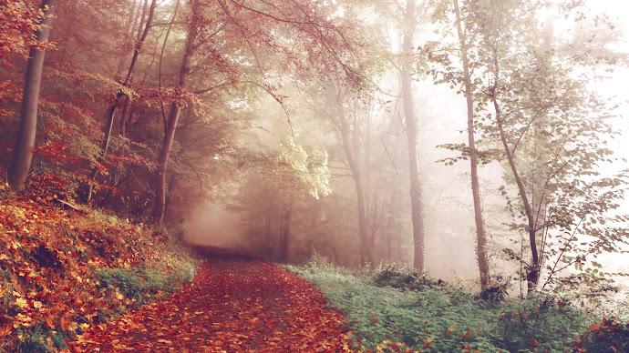 Wallpaper: Best Autumn CC0 Picture of 2015