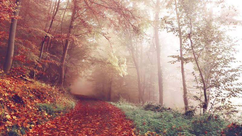 Best Autumn CC0 Picture of 2015