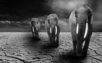 Wallpaper: Elephants on Africa arid lands