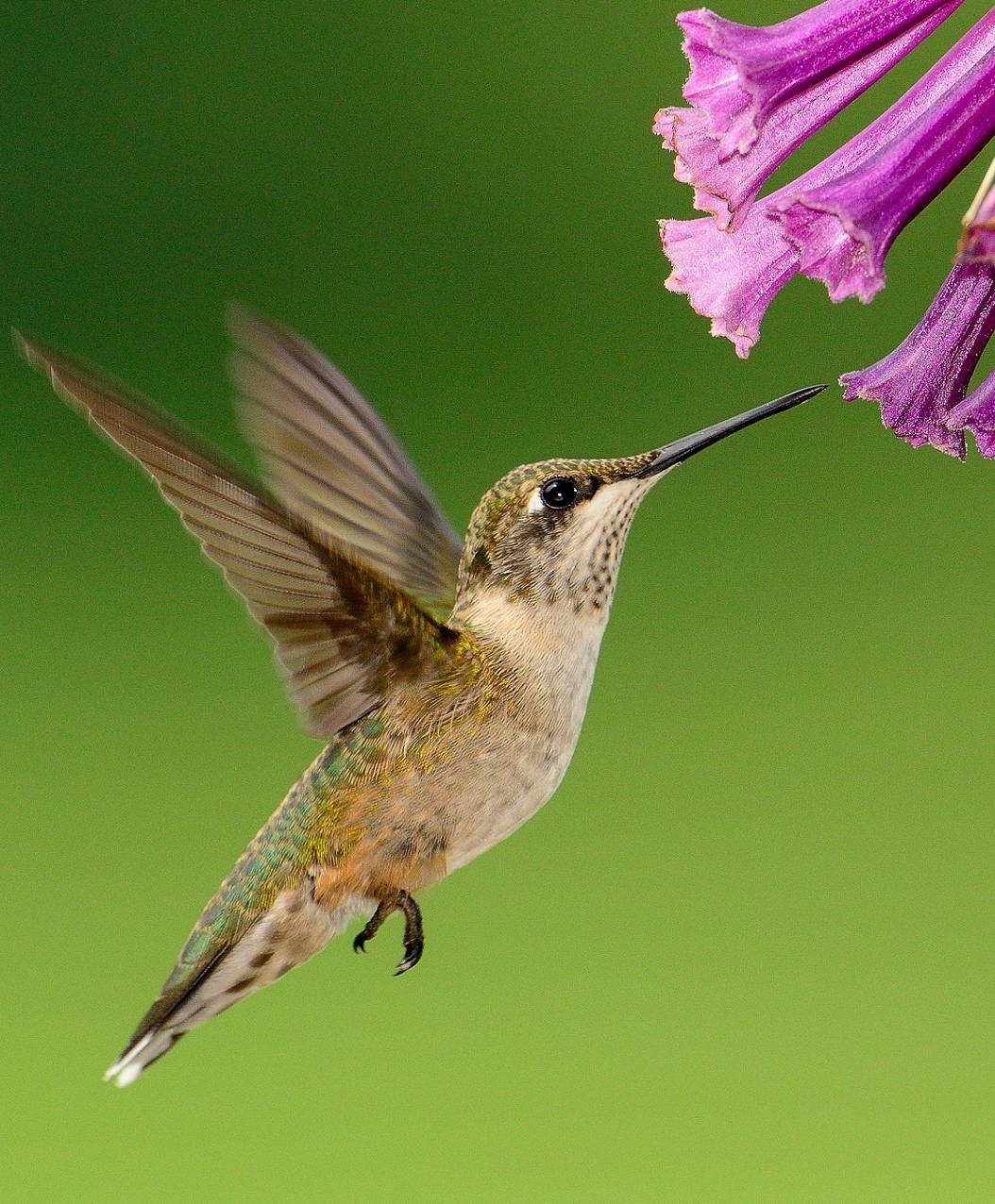Picture of a hummingbird.