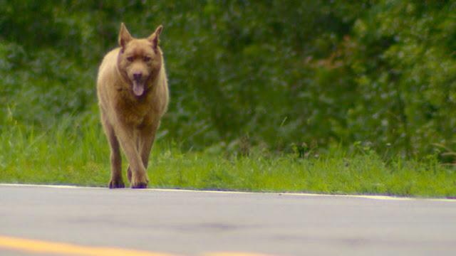 Perro camina diario 6 kilómetros para saludar a un pueblo