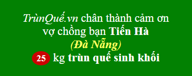Trùn quế về Đà Nẵng