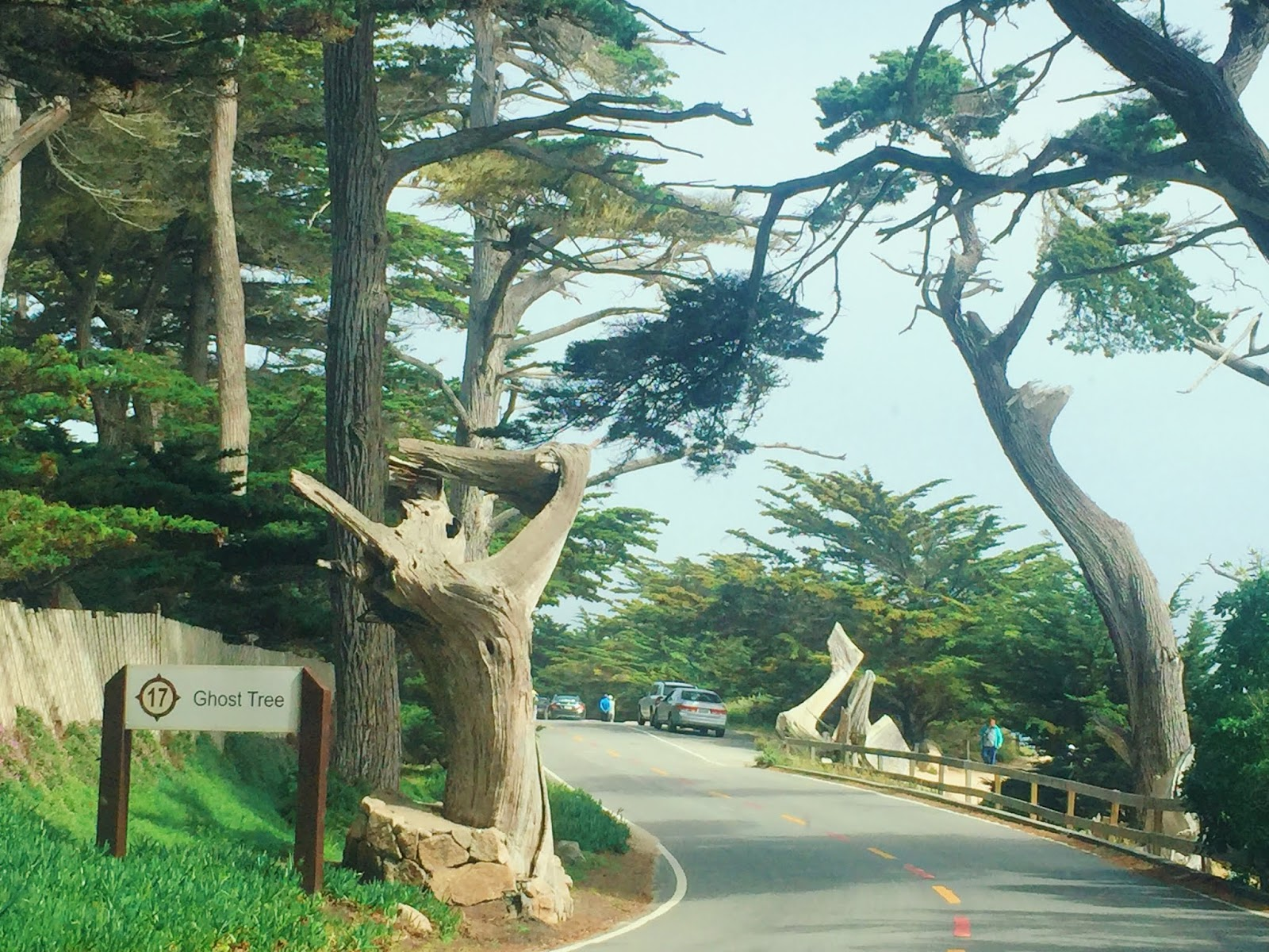 17-Mile Drive Carmel-by-the-sea - San Francisco Travel Guide - Vegan SFO
