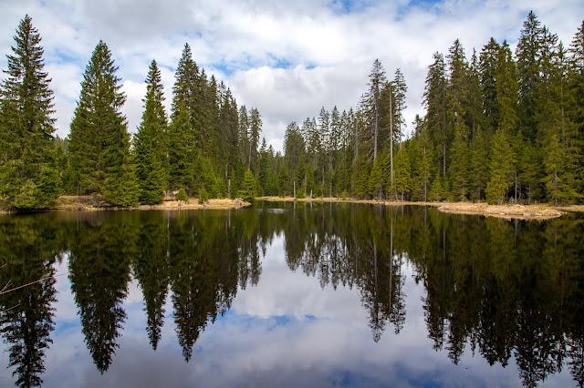 Auf vergessenen Wegen von Finsterau nach Buchwald  Wandern im Bayerischen Wald  Wanderung Nationalpark Bayerischer Wald 10
