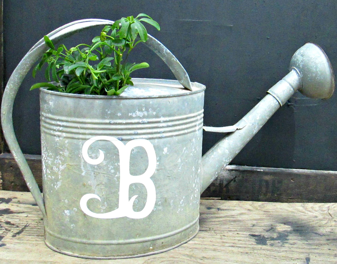 Galvanized Watering Cans Down To Earth Style Initial A Galvanized Watering Can