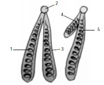Soal Materi Genetik Dan Sintesis Protein Beserta Jawabannya
