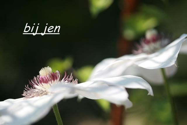 Garten, Macofotografie