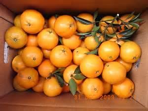 橘子: 橘子的種類
