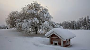 El calor de los jardines en invierno