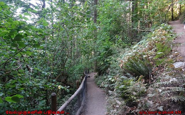 Rodney Falls Hike
