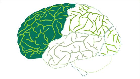 وصفات طبيعية لزيادة قوة التفكير وعلاج ضعف الذاكرة