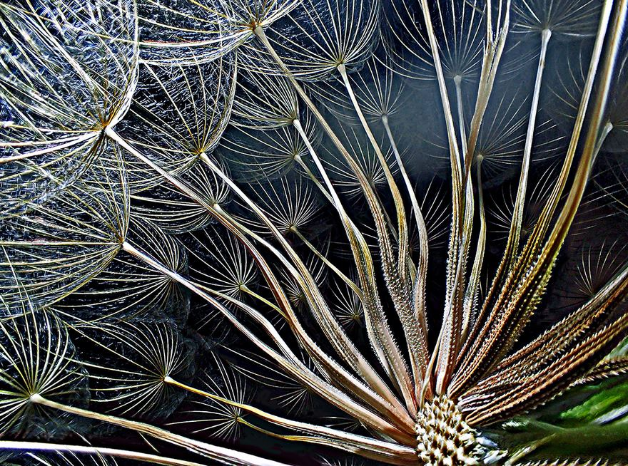 2016 Nikon Macro Photo Contest Winners Show The World Like You've Never Seen Before - Goatsbeard Flower