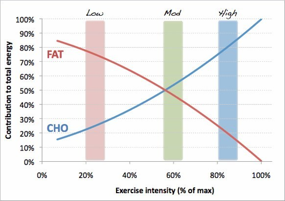 fat and cho on exercise performance