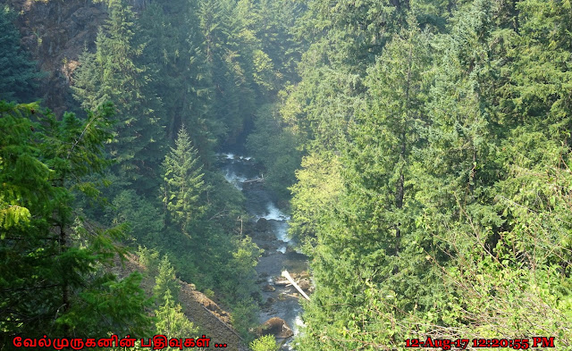 Umpqua National Forest Oregon