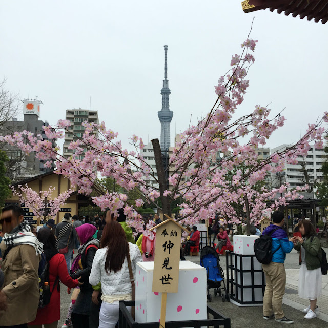 東京観光:浅草寺から東京スカイツリーが見える