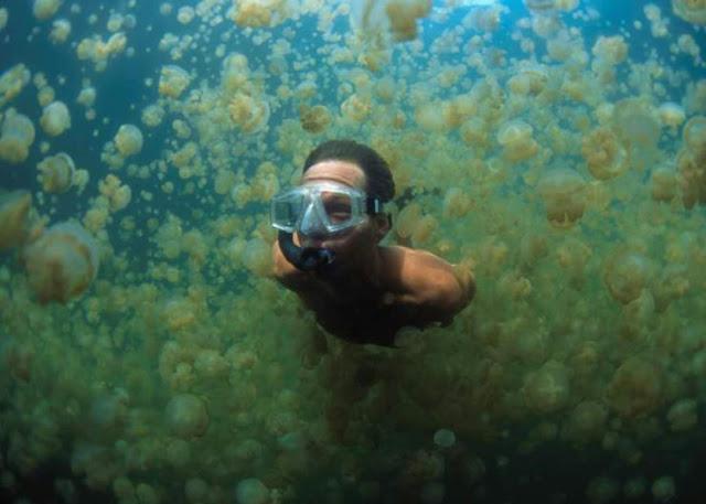 Jellyfish Lake, Eil Malk pulau, Palau