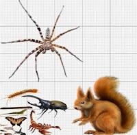 Tamaño Araña cazadora gigante