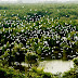 Thiên nhiên tuyệt đẹp của vườn Quốc gia Tràm Chim