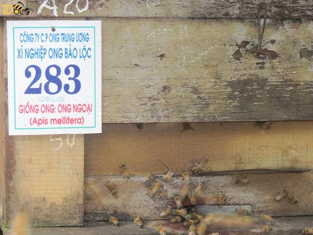 Mua Sữa Ong Chúa Ở Đâu Đảm Bảo Tươi Nguyên Chất 100%