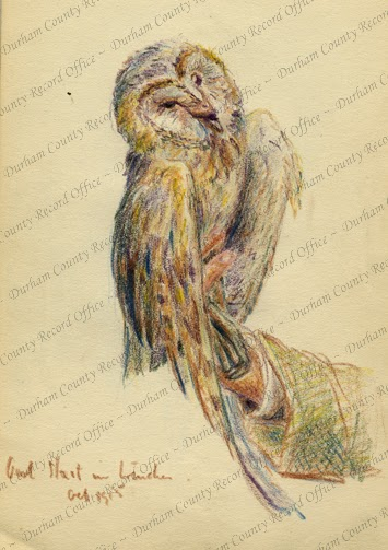 Colour pencil sketch, by Robert Mauchlen, of an owl held on a man's hand, captioned Owl hurt in trenches, October 1915 (D/DLI 7/920/8(15))