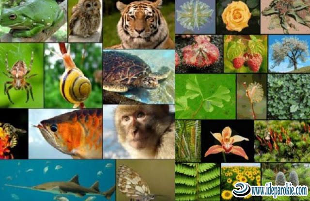 Keanekaragaman Hayati di Meliputi Pengertian, Macam-Macam, Tingkatan, Gen, Spesies dan Ekosistem