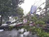 Hujan dan Angin Kencang Belasan Pohon Di Sleman Tumbang Timpa Rumah