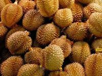 5 Perbedaan Durian Montong dan Durian Biasa