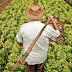RUI ADERE A PROGRAMA PARA GARANTIR RENDA A 345 MIL FAMÍLIAS DE AGRICULTORES