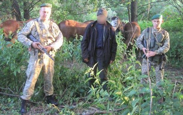 Українець намагався незаконно вивезти в Росію коней