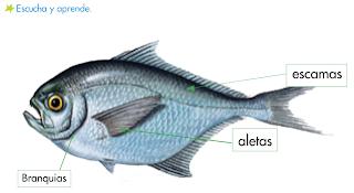 http://primerodecarlos.com/SEGUNDO_PRIMARIA/noviembre/Unidad_4/actividades/cono_unidad4/carteristicas_peces.swf