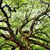 इस पेड़ को देख देखकर परेशान हैं लोग, कर रहे है पूजा!