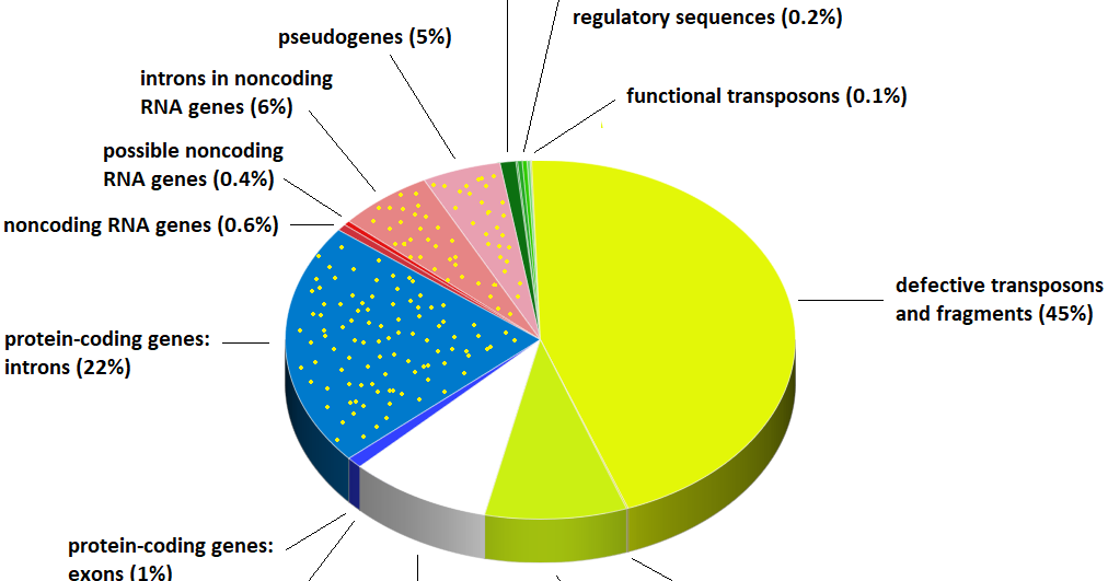 Sandwalk: What's In Your Genome? - The Pie Chart