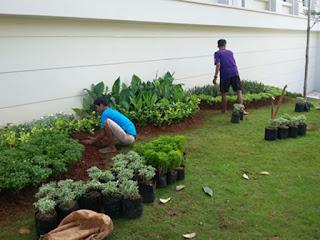 tukang taman serpong,jasa pembuatan taman di serpong