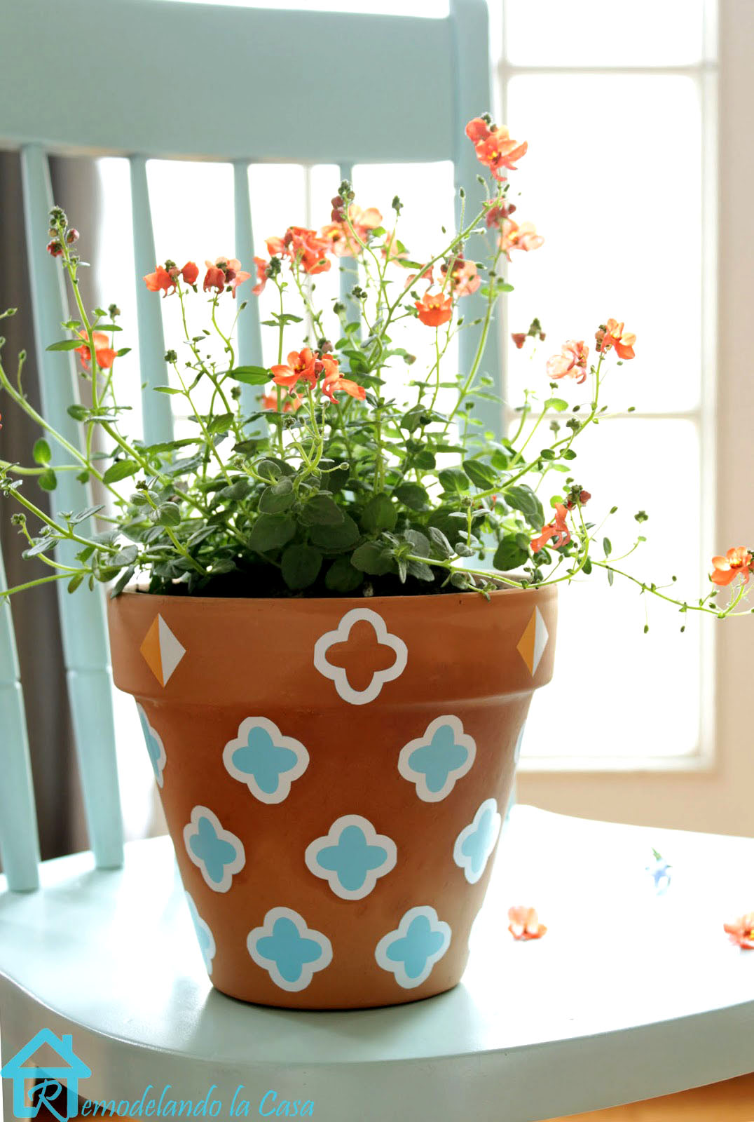 orange flowers in terracotta planter