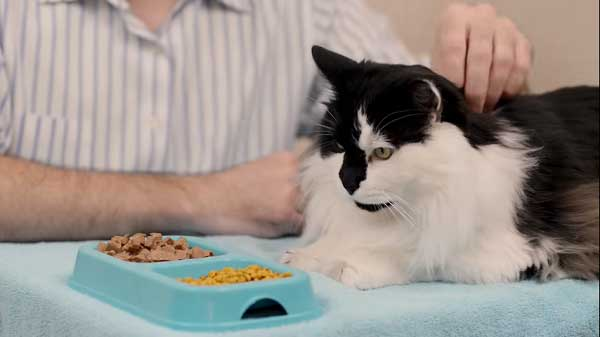 what can cats eat and can't eat