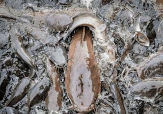 2 cara pijah ikan lele