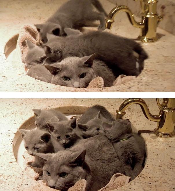 12 фото смешных животных со своими детишками