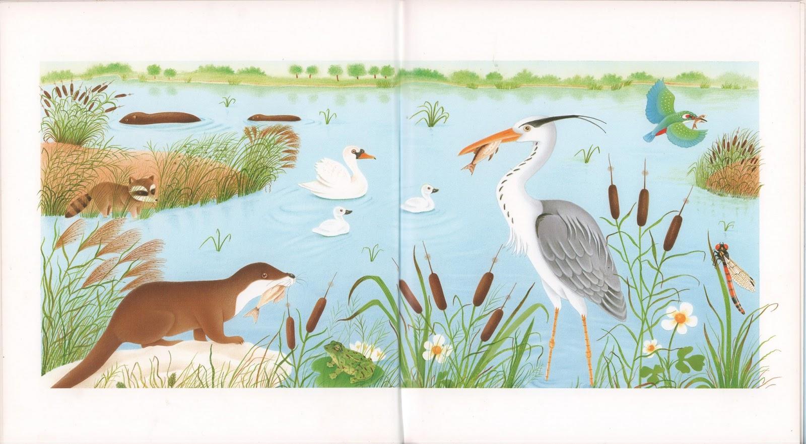 Cole r f rences je lis avec les animaux du bord de l 39 eau for 94 castor eau